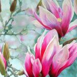Mystical-Magnolias-94x79-Oil-Framed-R18 750-Zanne-Small