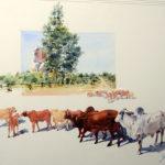 Rhodesian-Royalty-52x71-Watercolour-Framed-R6 900-Zanne-Small
